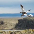 Estancia Laguna Verde Bird Life