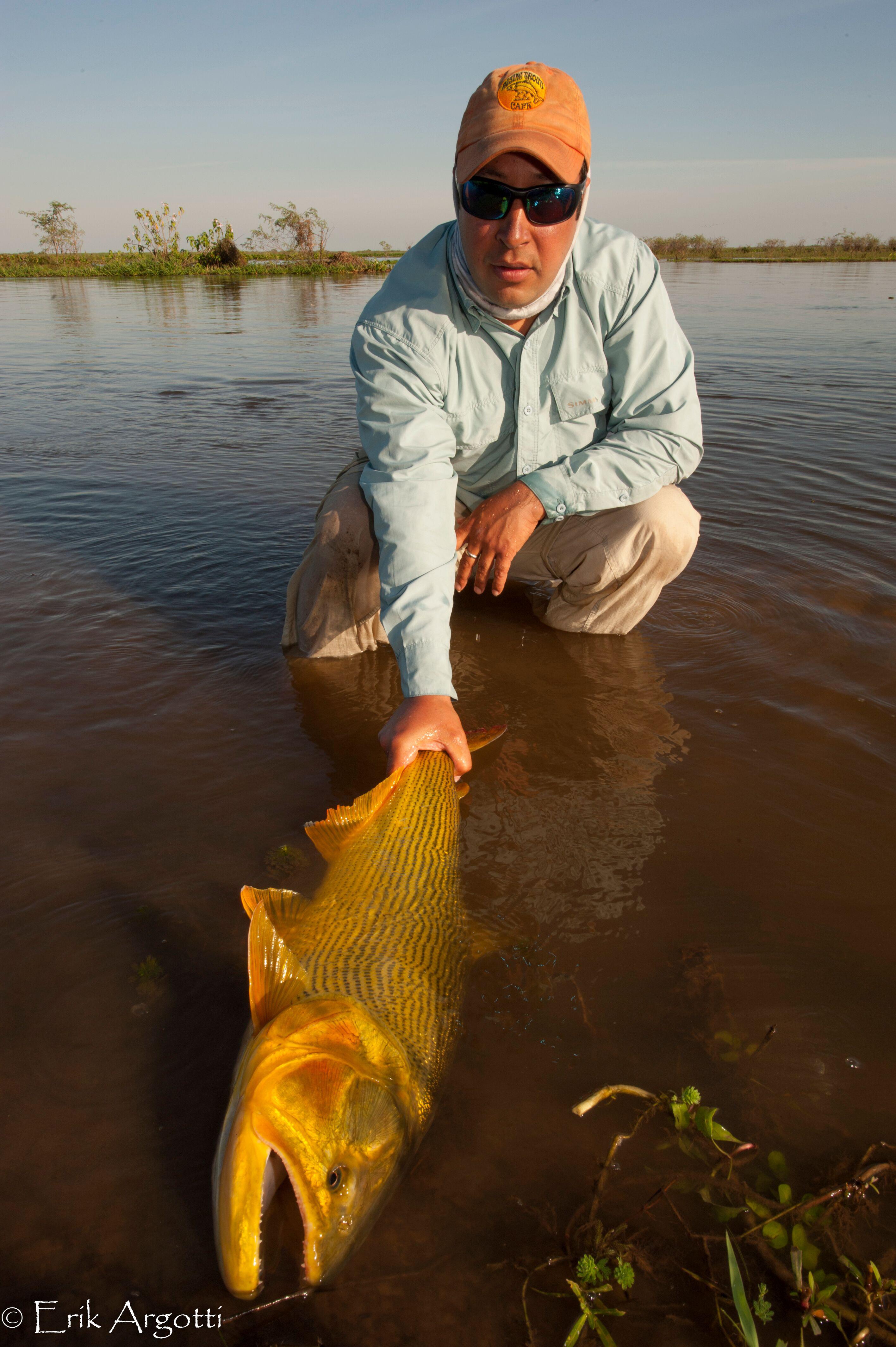 Golden Dorado Argentina Fly Fishing
