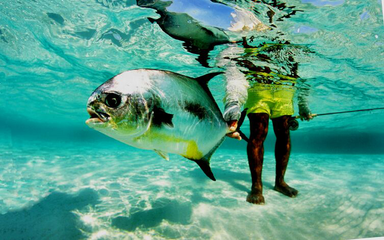 Permit on the fly rod Belize