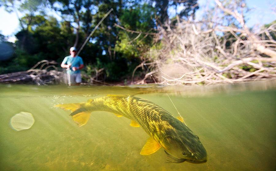 Dorado Fly Fishing Argentina