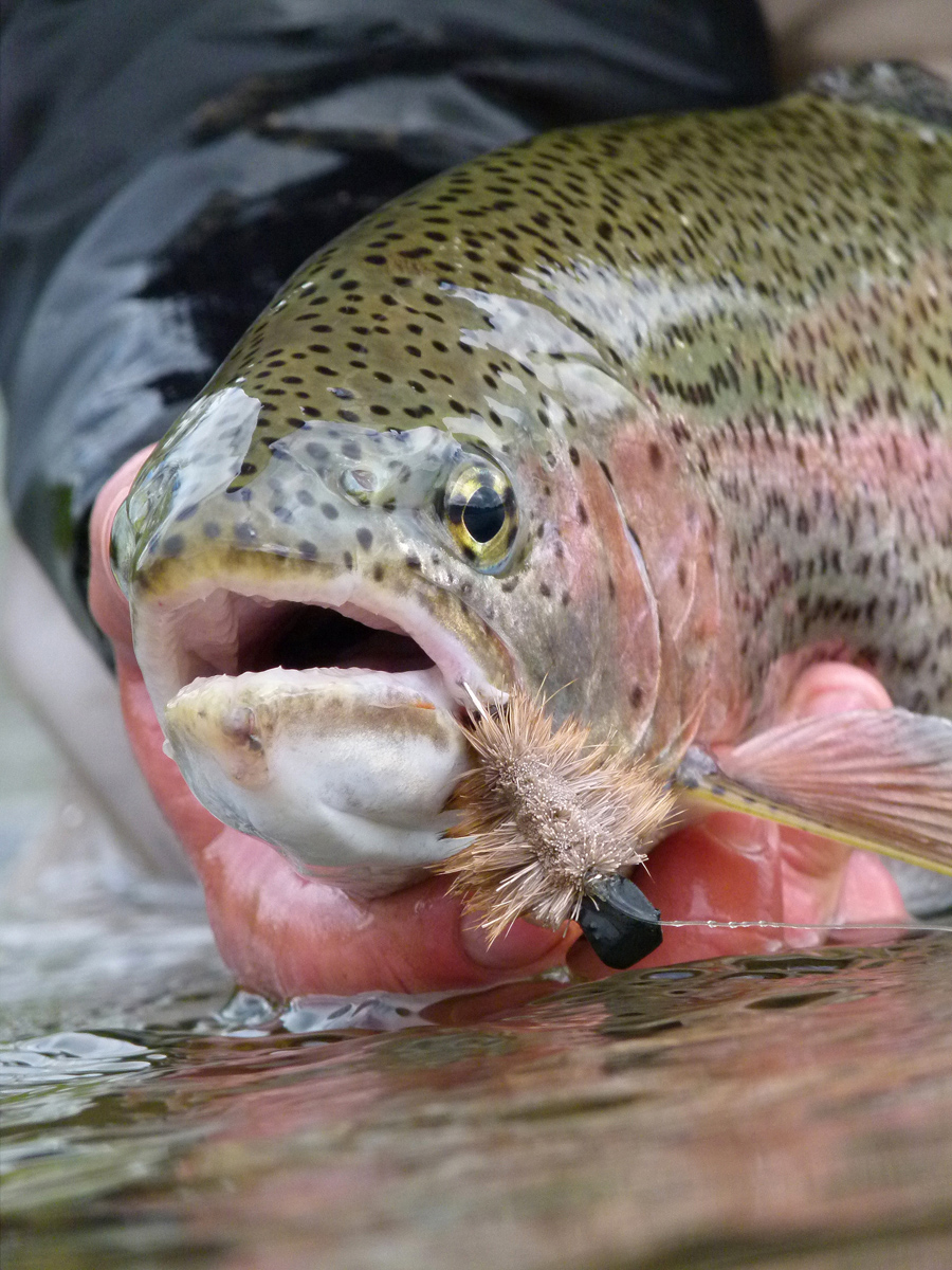 Rainbow Trout Mouse Fishing Alaska