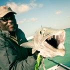 Bahamas Barracuda