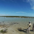 Bahamas Wading