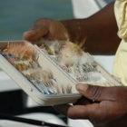 Andros Bonefish Flies
