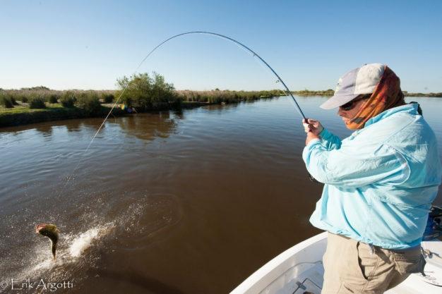 Flyfishing for Dorado in Argentina
