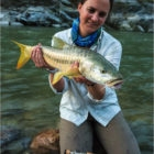 Fly fishing Mahseer India