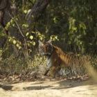 Jim Corbett Tiger Reserve