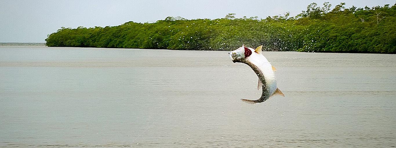 Belize Tarpon Jump