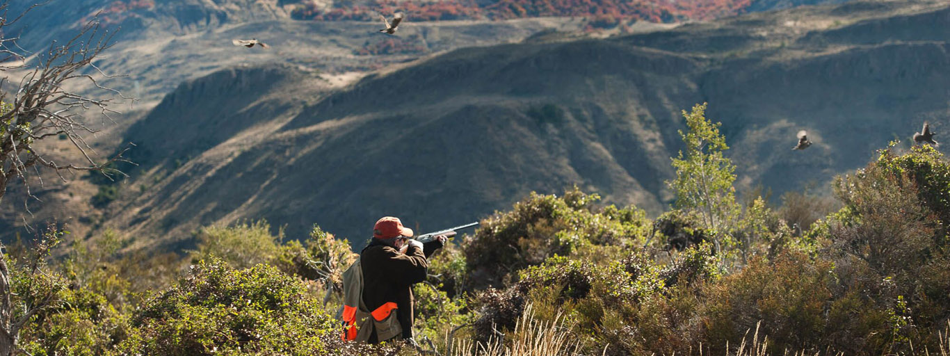 Chubut Province Quail Hunting