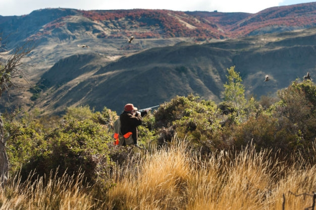 Patagonia River Guides Quail