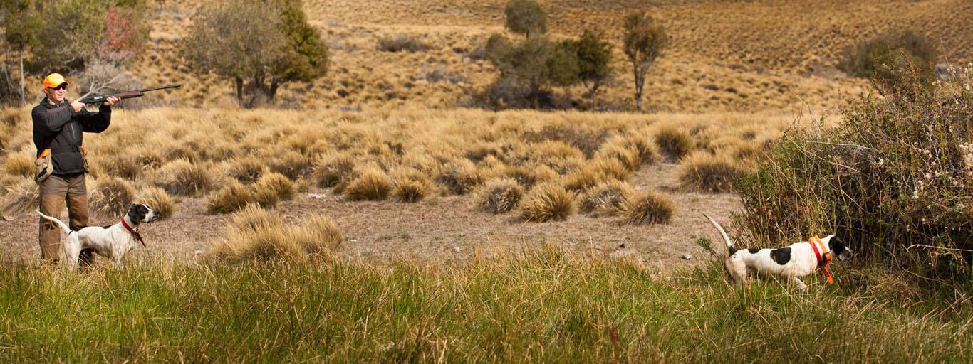 Quail Trevelin Argentina
