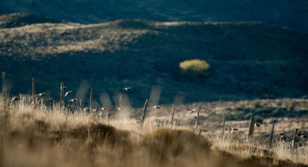 Rance Rathie Quail Hunting