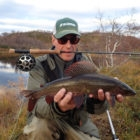 Russian Grayling