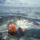 Turneffe Flats Bonefish release