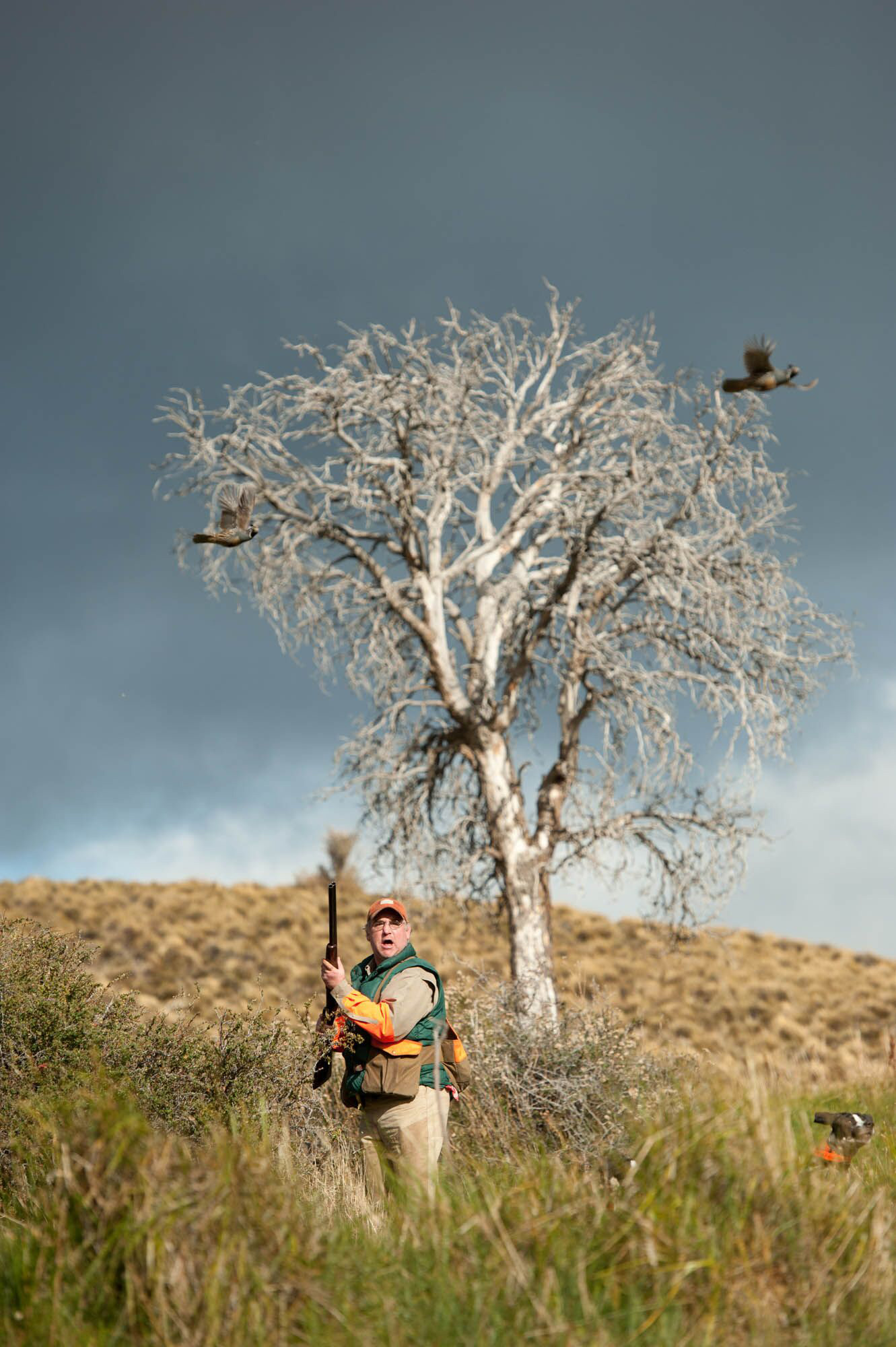 Upland bird hunting South America