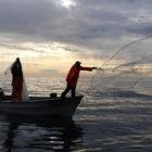 BAHIA DE LOS SUENOS bait gathering roosterfish