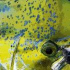 Baja Dolfin Dorado