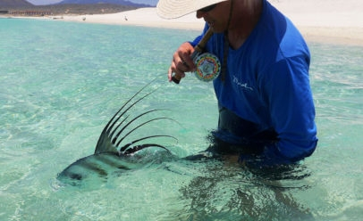 Roosterfish Mexico