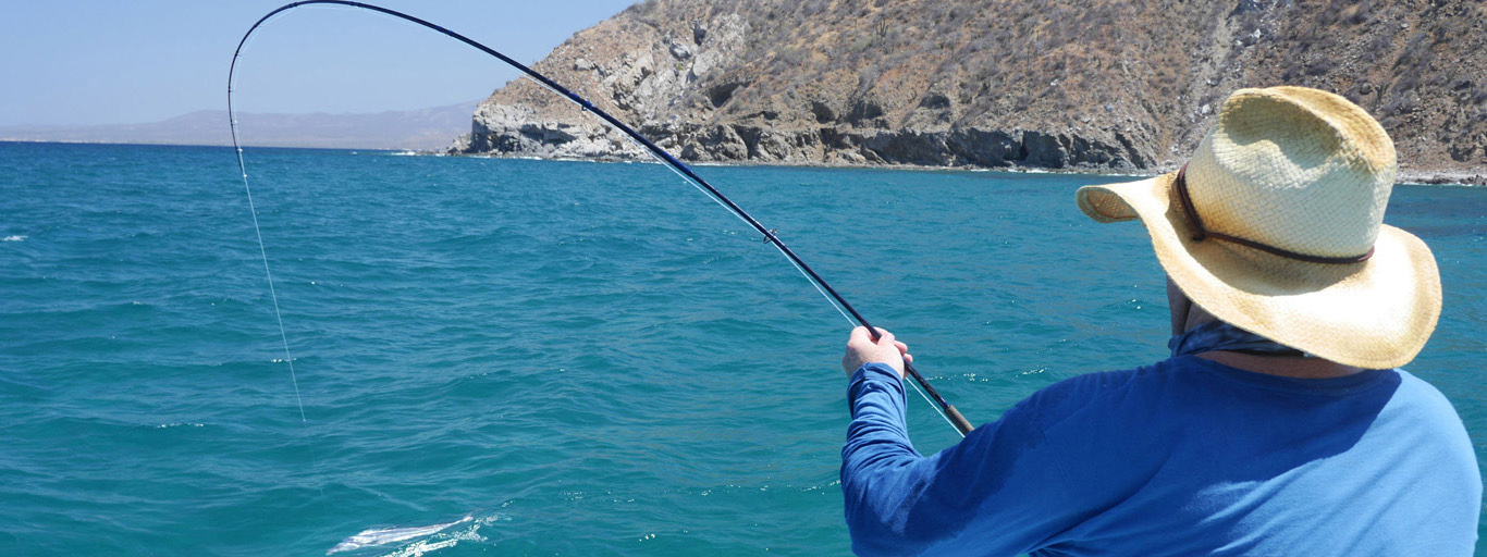 Roosterfish on fly rod from boat mexico