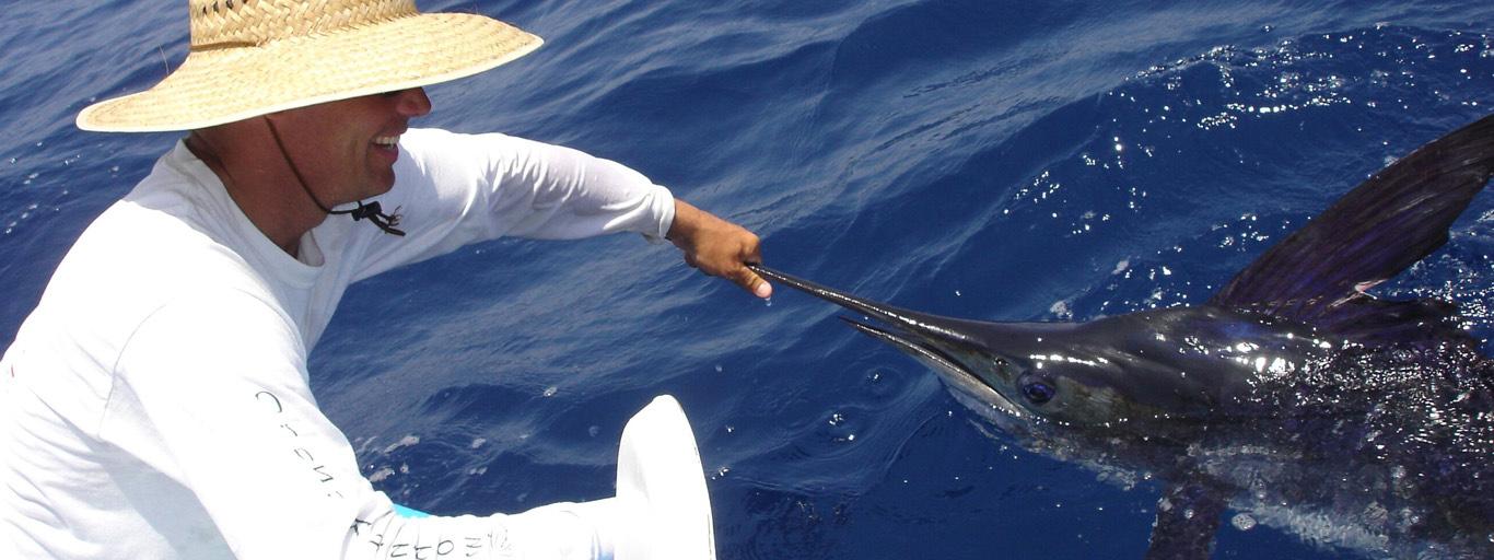 Sailfish Baja Mexico Fly