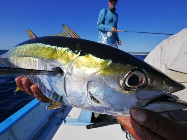 fly fishing offshore baja