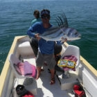 rooster fish destination