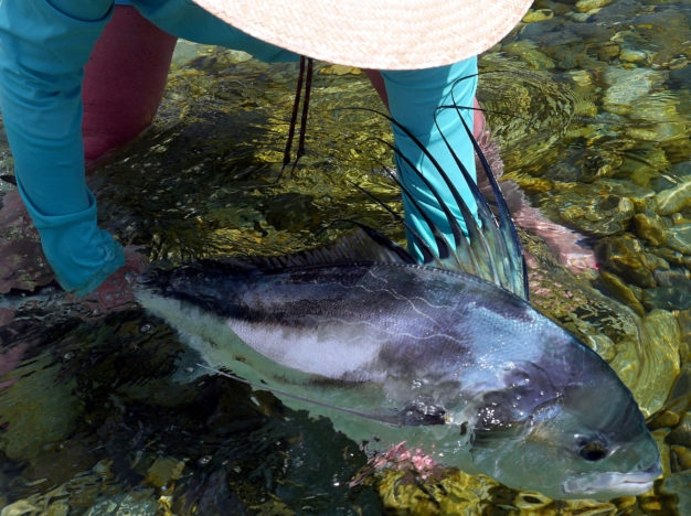 roosterfish techniques for mexico
