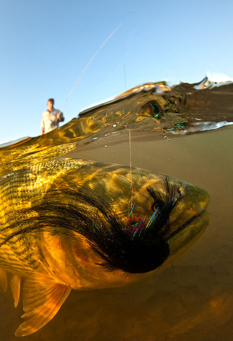 Flyfishing Golden Dorado Argentina Lodge