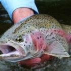 Best Fly Fishing Alaska
