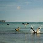 los roques catamaran bonefish flyfishing