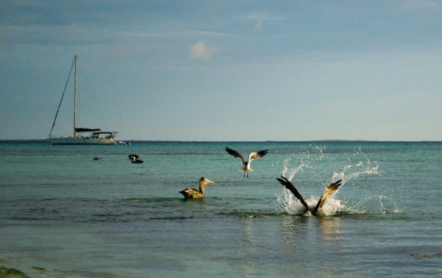 los roques catamaran bonefish flyfishing
