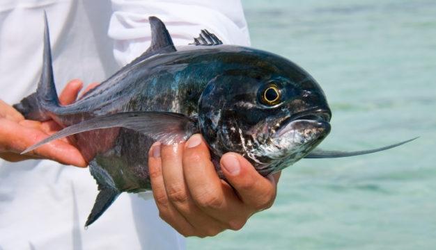 venezuela fly fishing