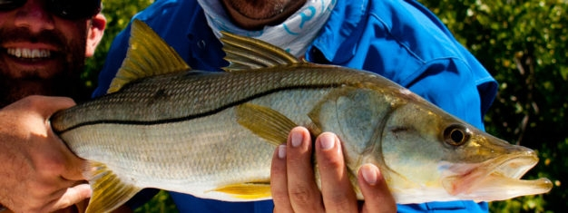 Los Roques Snook Flyfishing