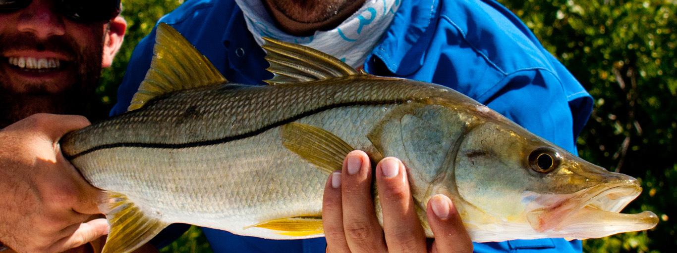 Los Roques Snook Flyfishing