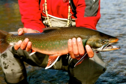 Arctic Char in autumn