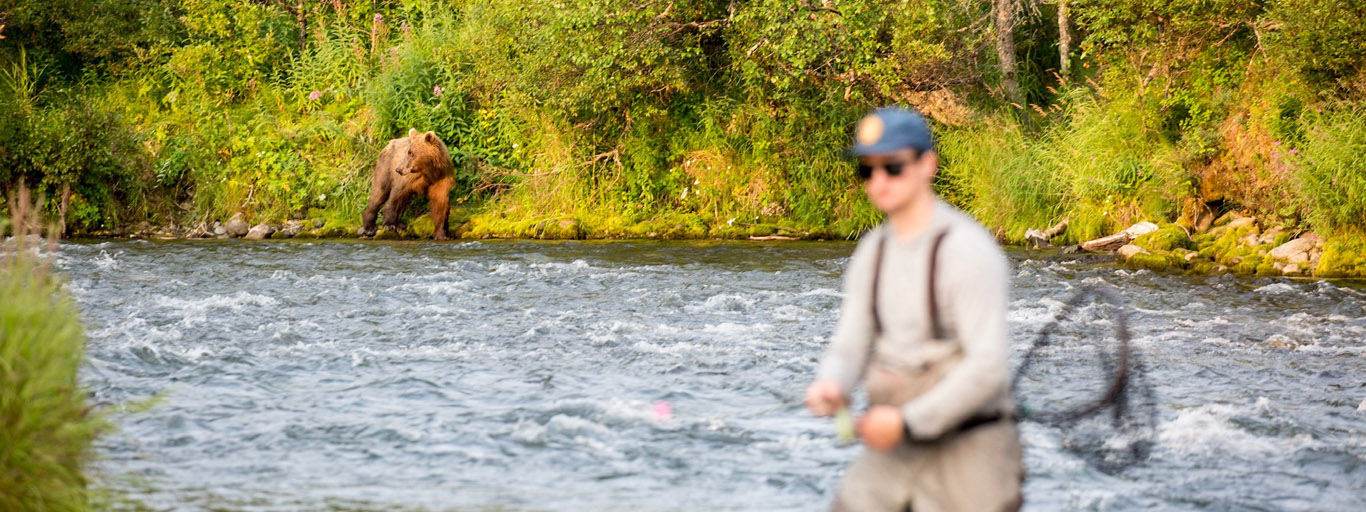 Fly fishing near bears