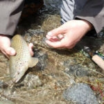 Affordable fly fishing program in Argentina