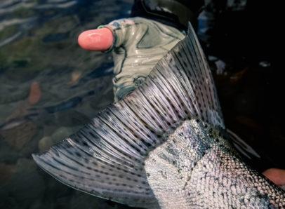 Jurassic Lake trout macro photography