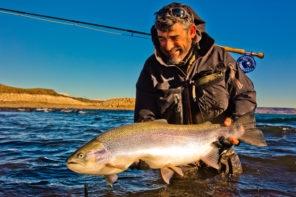 Lago strobel size of rainbow trout