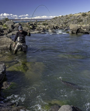 Early spawners on the Barrancoso at Jurassic Lake Lodge like dry flies too