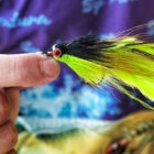 Fly patterns golden dorado argentina