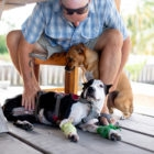 Dogs of Ambergris Caye