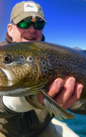 Brown Trout fly fishing Argentina