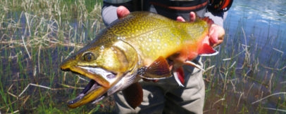 Size of Argentina brook trout