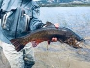 Brook trout size by country