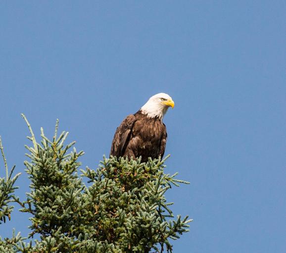Birdinng Alaska