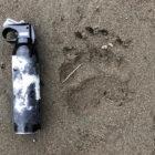 bear spray rental alaska