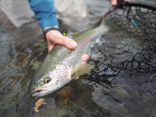 Top water Alaska raibow flies